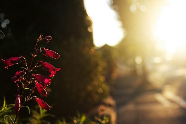 素敵な朝の時間♪